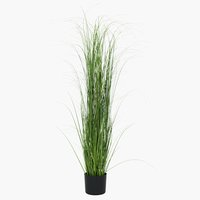 Planta artificial MARKUSFLUE A150cm gram